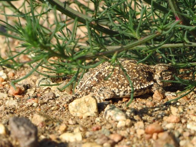 Desert wildlife.