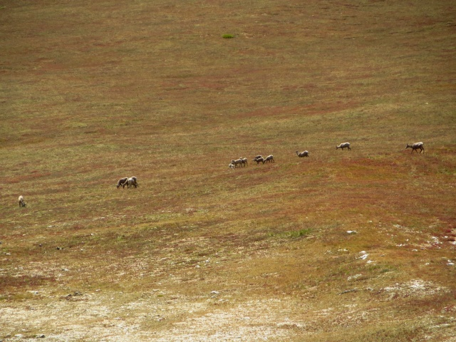 Some deer species or another we spotted in the distance while descending south from Mt. Antero.
