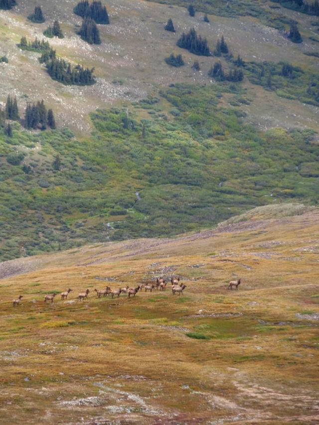 A herd of elk run below us on the climb up to Mt. Sherman.